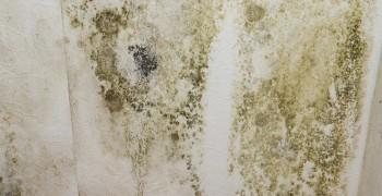 condensation_alençon